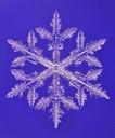 雪結晶の顕微鏡写真(普通樹枝)
